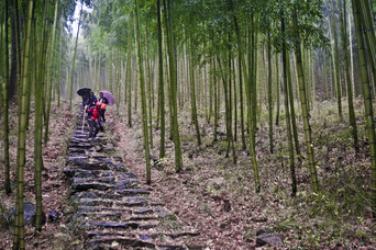 hiking, bamboo, forest, in anji