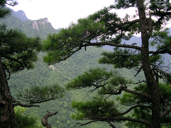 shanghai, forest, mountains